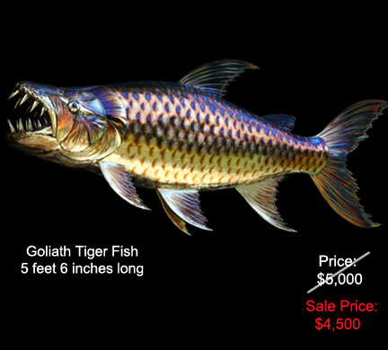 Goliath Tiger Fish
